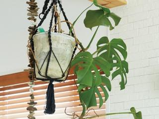 幸福を与えてくれる癒しのグリーン ワタシと呼吸をともにするプラント