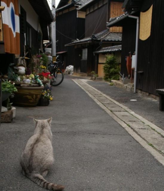 民宿 おやじの海 直島 宿前の風景