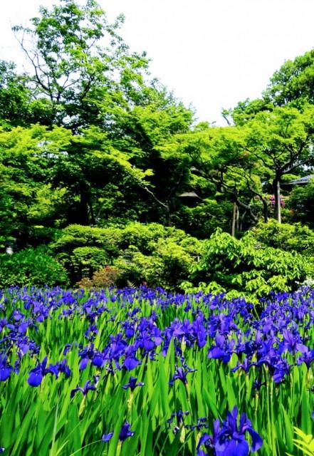 庭とカフェが魅力の東京の美術館 根津美術館